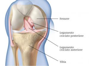 legamento crociato anteriore ginocchio