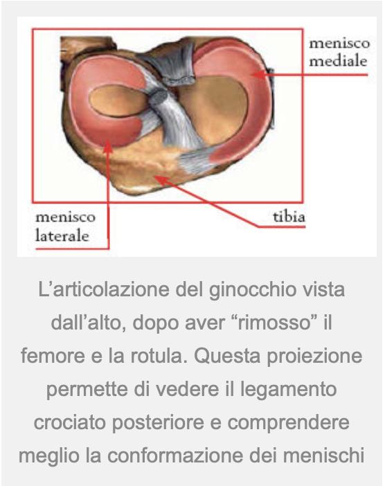 ginocchio-anatomia