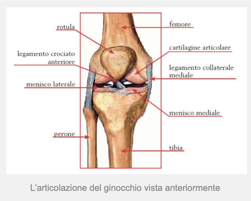 ginocchio-struttura